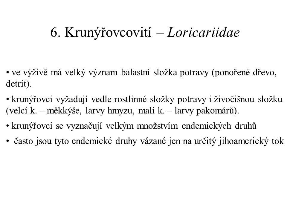 6. Krunýřovcovití – Loricariidae