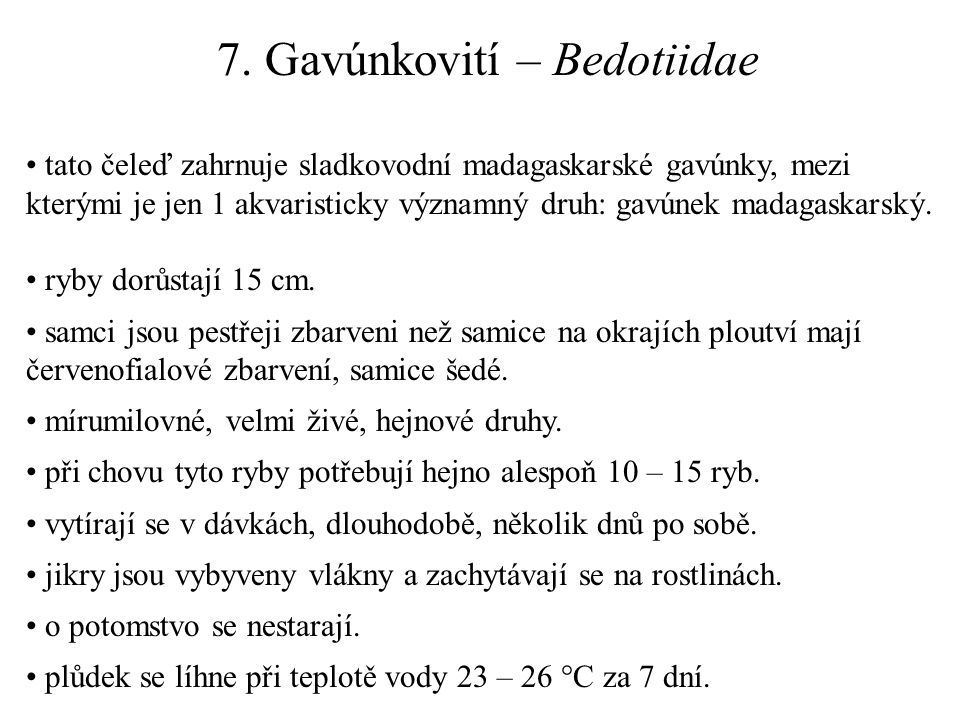 7. Gavúnkovití – Bedotiidae