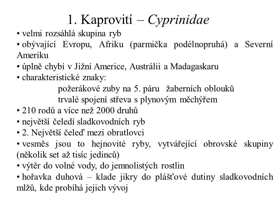 1. Kaprovití – Cyprinidae