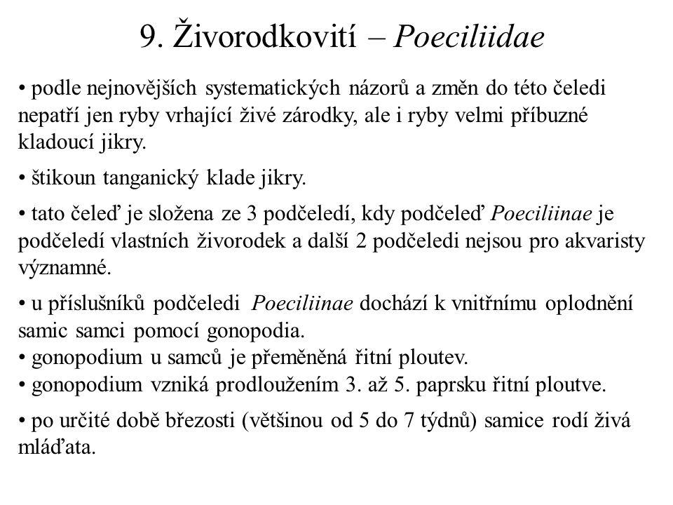 9. Živorodkovití – Poeciliidae