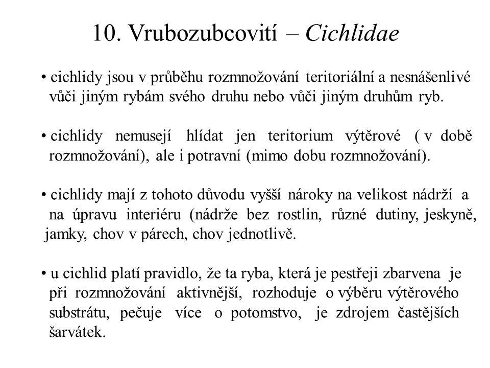 10. Vrubozubcovití – Cichlidae