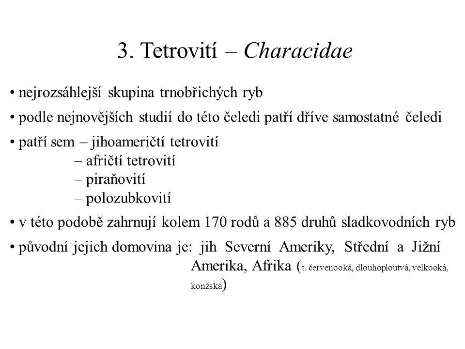 3. Tetrovití – Characidae