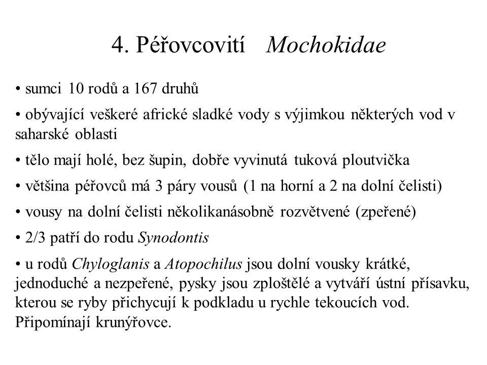 4. Péřovcovití Mochokidae