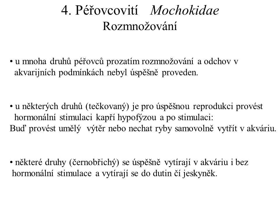 4. Péřovcovití Mochokidae Rozmnožování