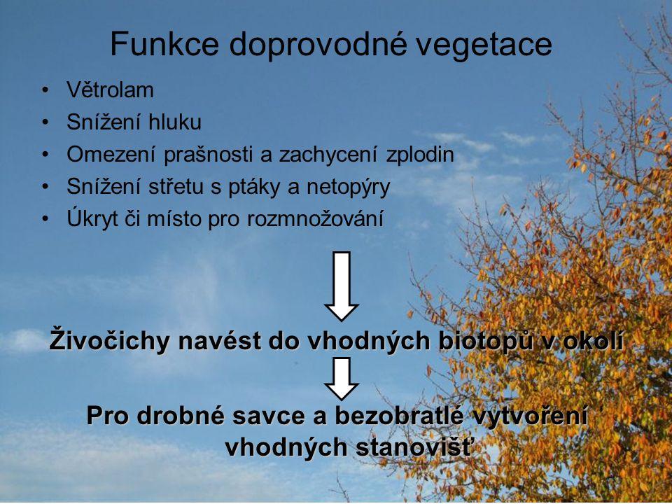 Funkce doprovodné vegetace