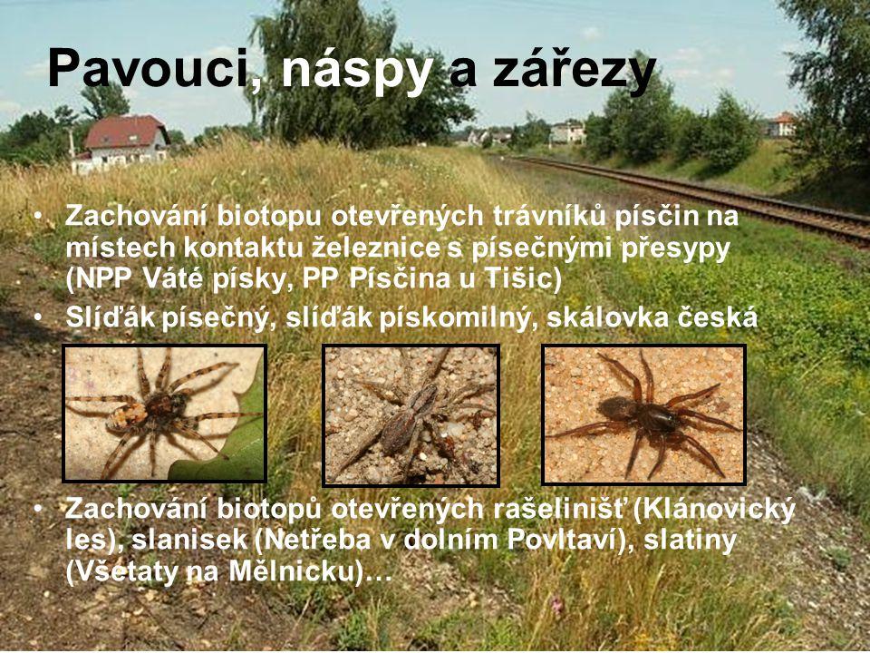 Pavouci, náspy a zářezy
