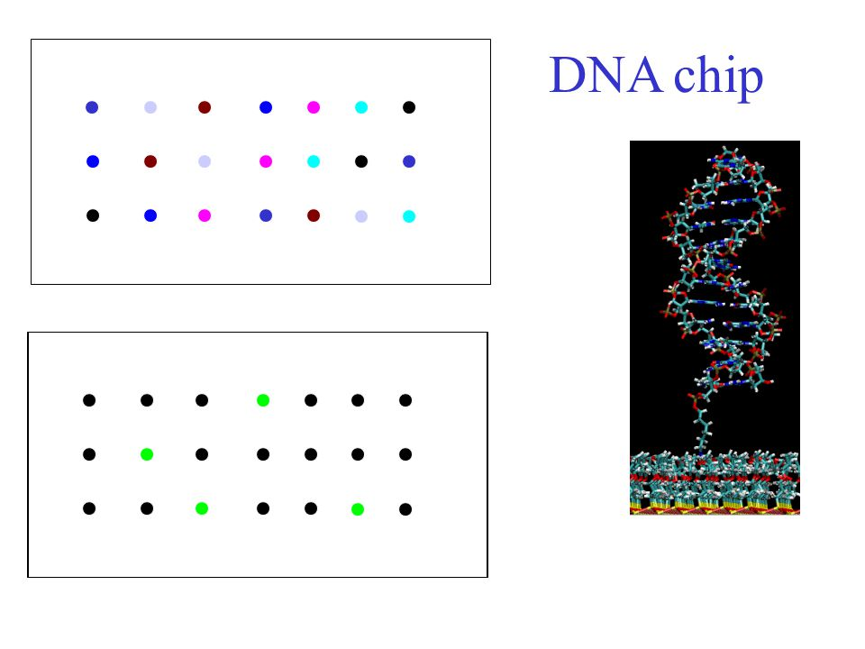 DNA chip Nanoscale Complexity at the Oxide/Water Interface
