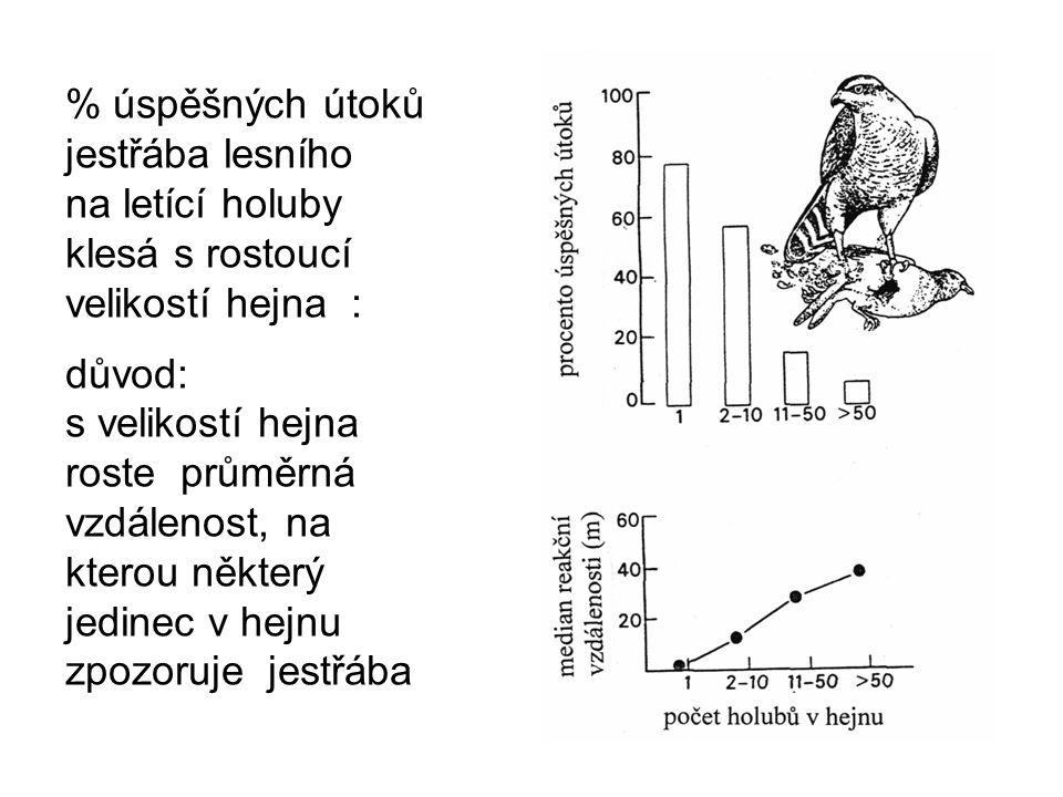 % úspěšných útoků jestřába lesního na letící holuby klesá s rostoucí velikostí hejna : důvod: s velikostí hejna roste průměrná vzdálenost, na kterou některý jedinec v hejnu zpozoruje jestřába