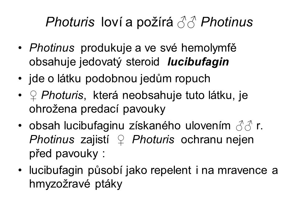 Photuris loví a požírá ♂♂ Photinus