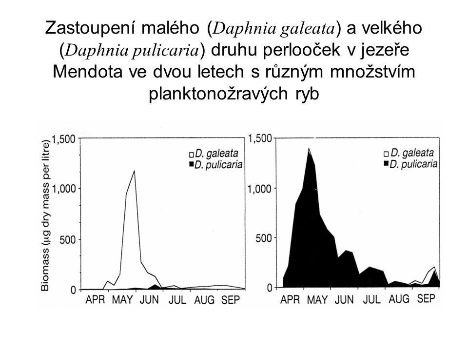 Zastoupení malého (Daphnia galeata) a velkého (Daphnia pulicaria) druhu perlooček v jezeře Mendota ve dvou letech s různým množstvím planktonožravých ryb