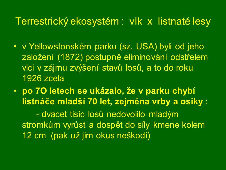 Terrestrický ekosystém : vlk x listnaté lesy