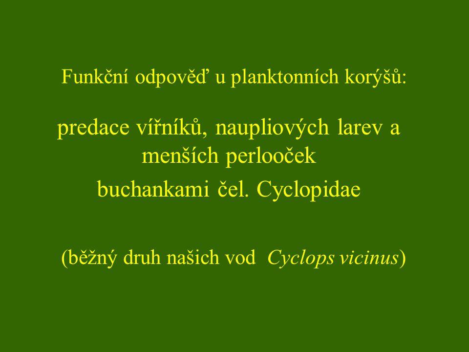Funkční odpověď u planktonních korýšů: