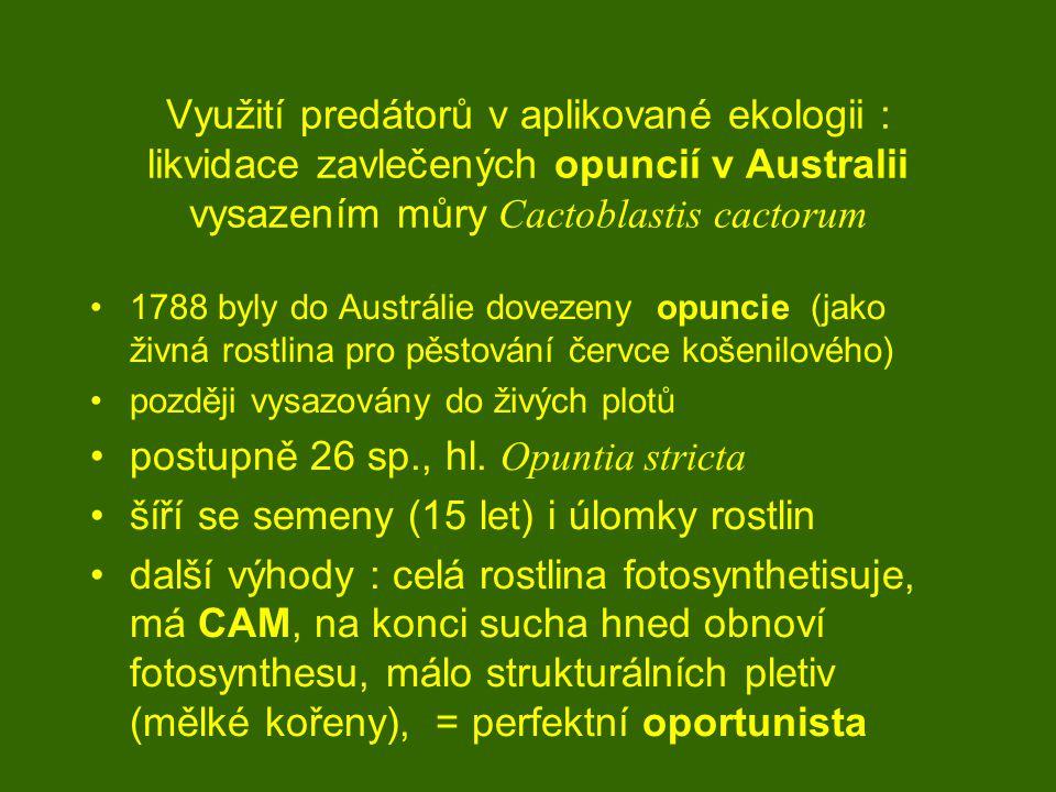 postupně 26 sp., hl. Opuntia stricta