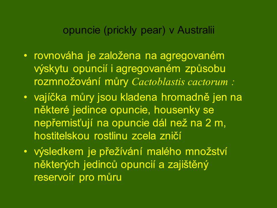 opuncie (prickly pear) v Australii