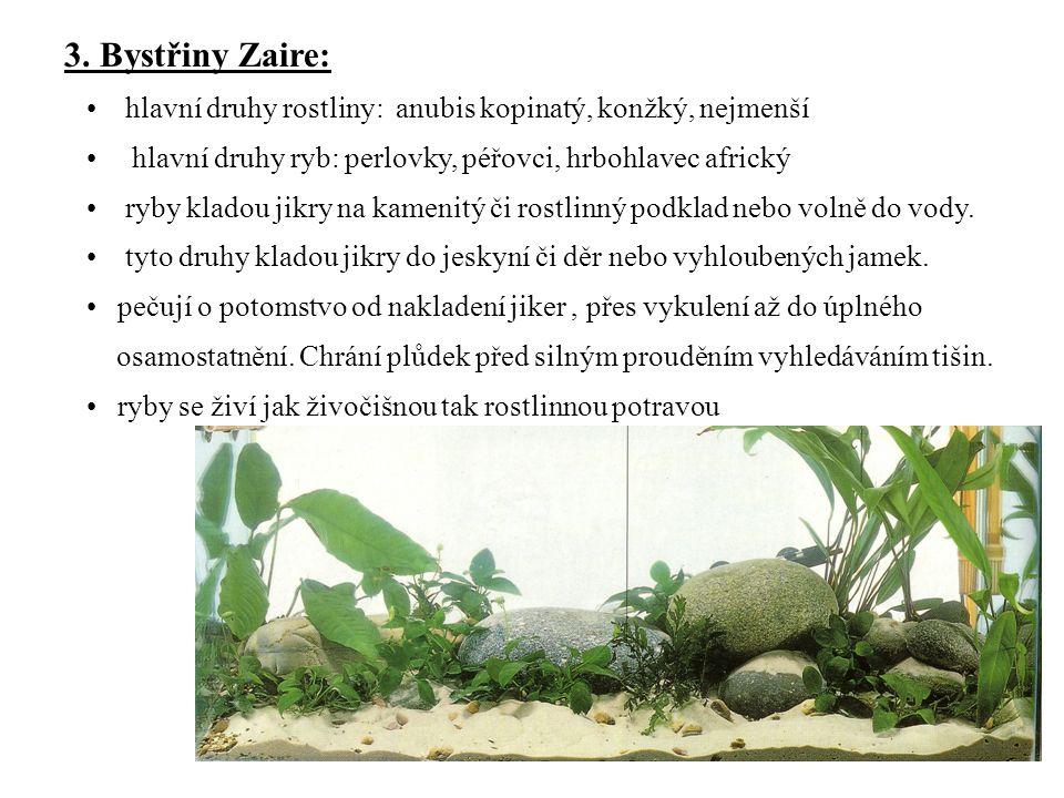 3. Bystřiny Zaire: hlavní druhy rostliny: anubis kopinatý, konžký, nejmenší. hlavní druhy ryb: perlovky, péřovci, hrbohlavec africký.