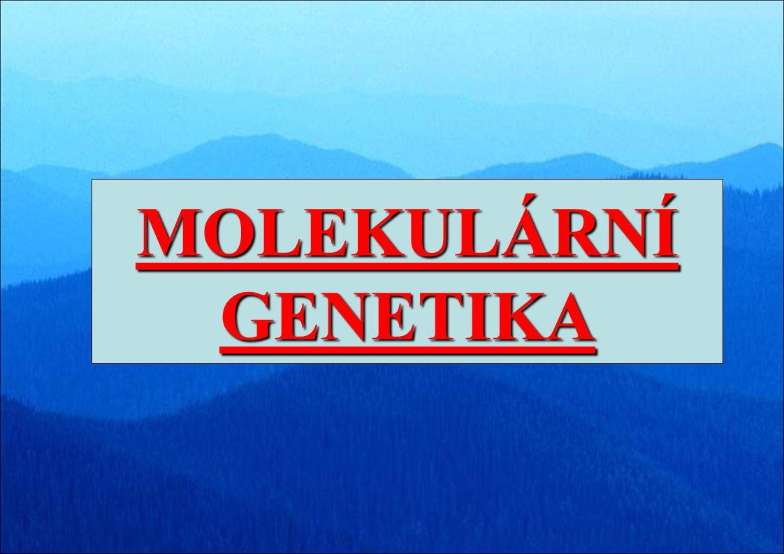 MOLEKULÁRNÍ GENETIKA