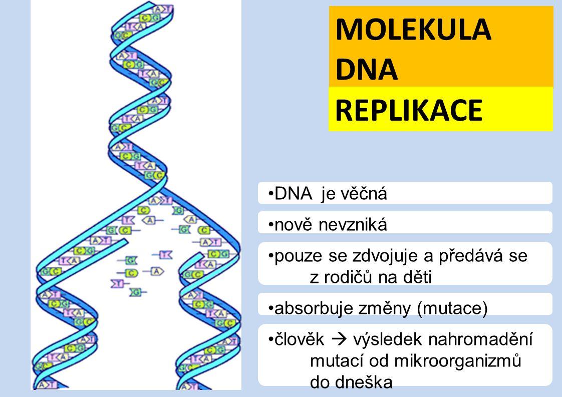 MOLEKULA DNA REPLIKACE DNA je věčná nově nevzniká