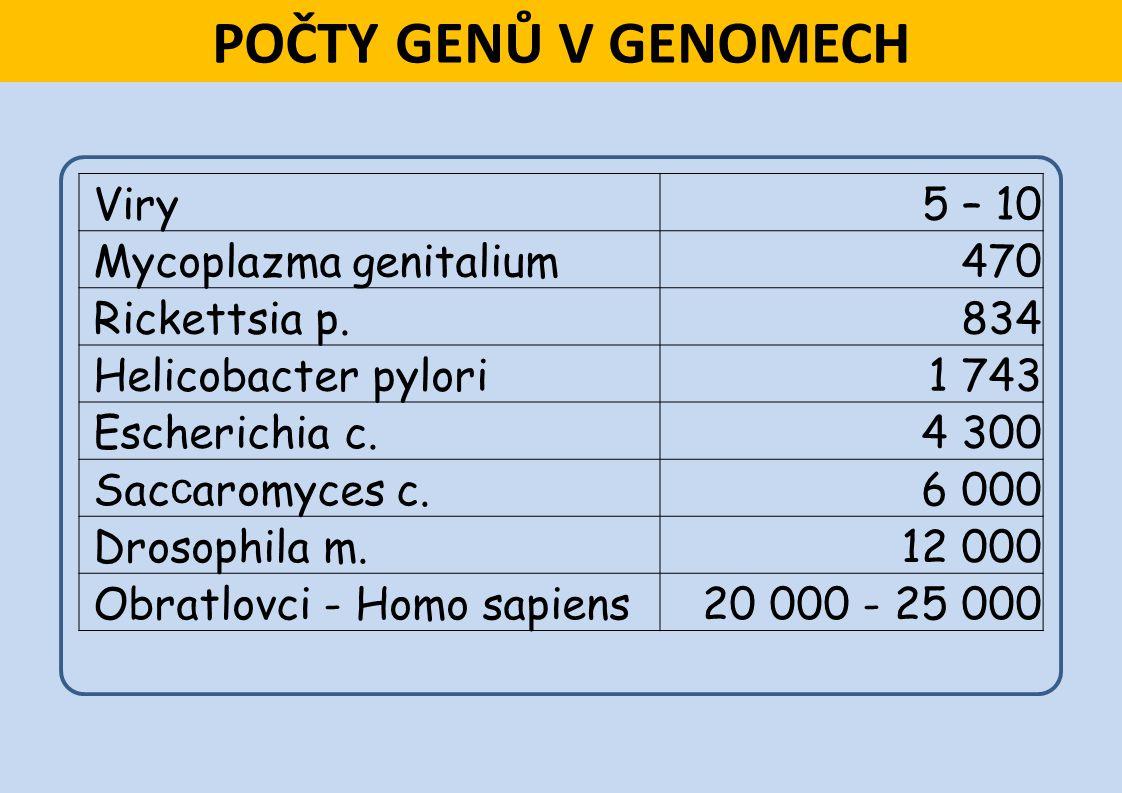 POČTY GENŮ V GENOMECH Viry 5 – 10 Mycoplazma genitalium 470