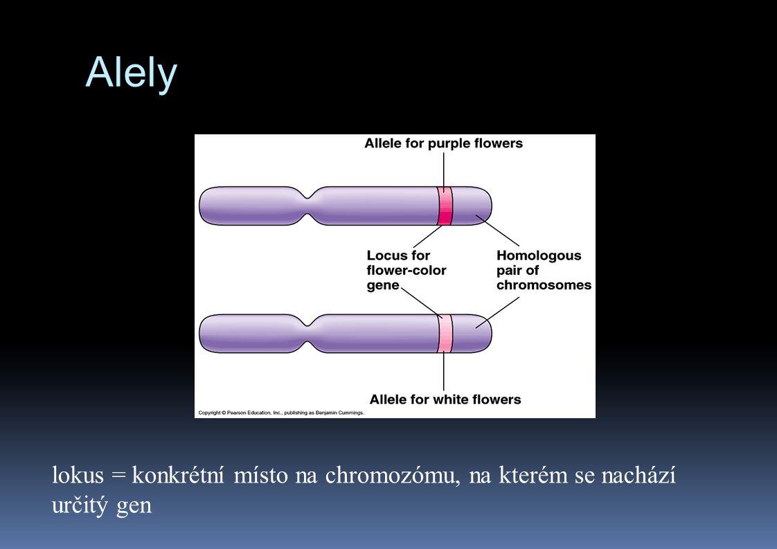 Alely lokus = konkrétní místo na chromozómu, na kterém se nachází určitý gen