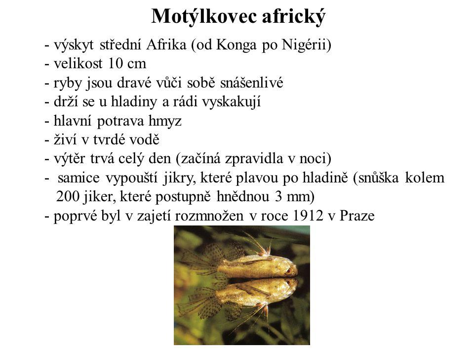Motýlkovec africký výskyt střední Afrika (od Konga po Nigérii)