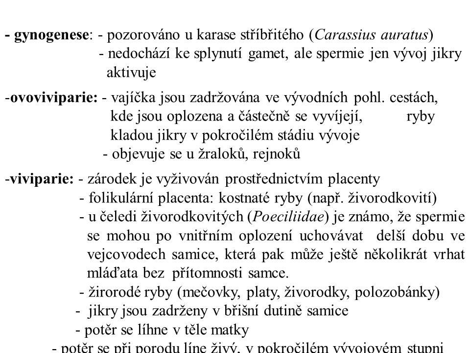 - gynogenese: - pozorováno u karase stříbřitého (Carassius auratus)