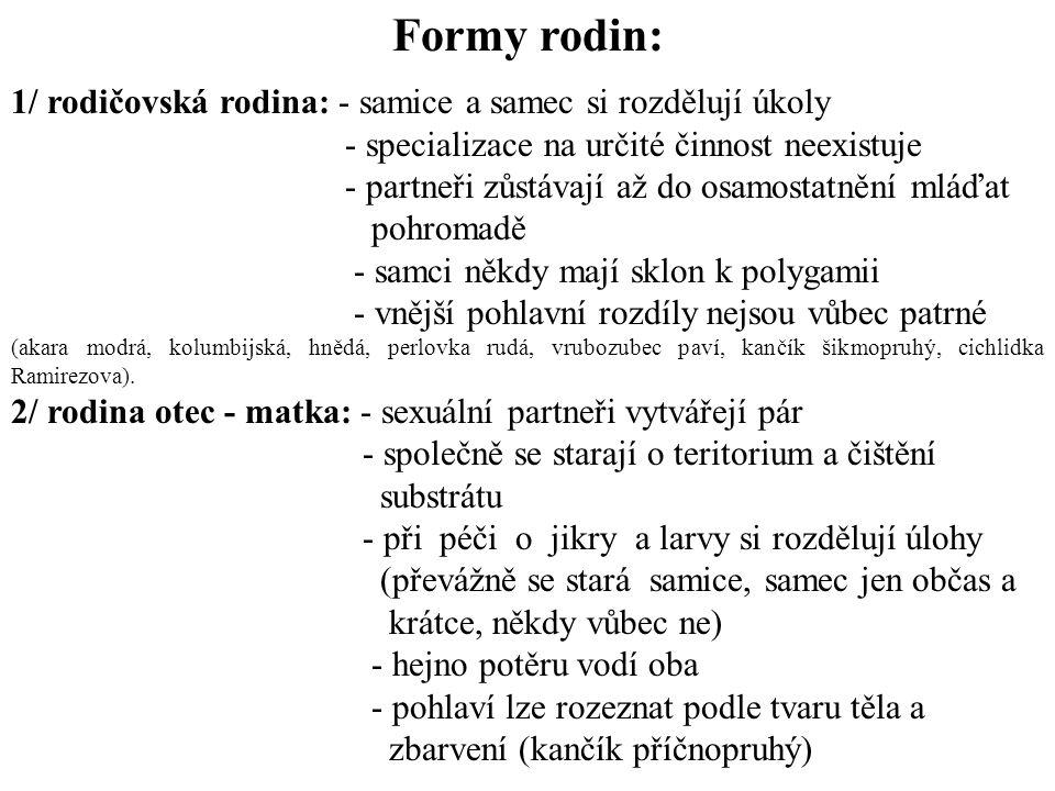 Formy rodin: 1/ rodičovská rodina: - samice a samec si rozdělují úkoly
