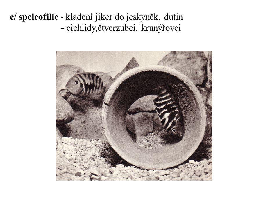 c/ speleofilie - kladení jiker do jeskyněk, dutin
