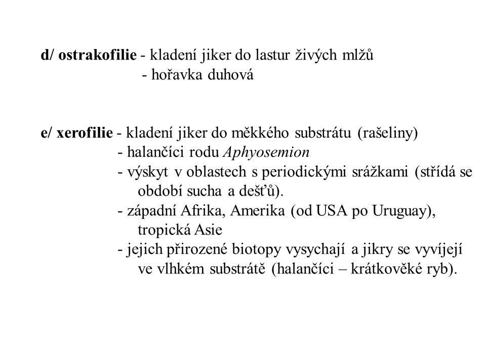 d/ ostrakofilie - kladení jiker do lastur živých mlžů