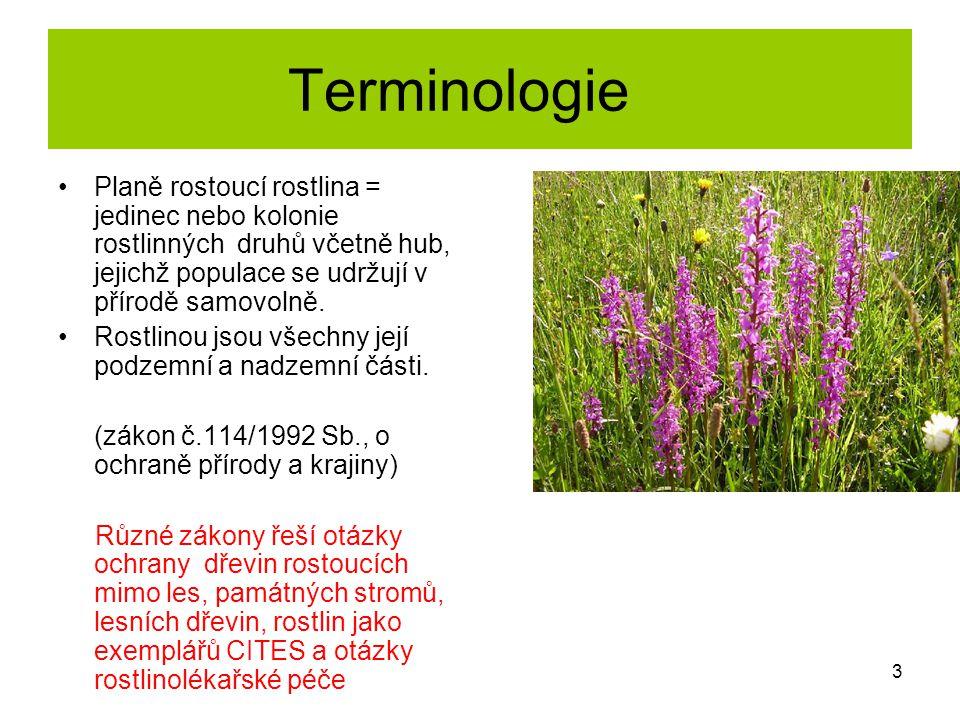 Terminologie Planě rostoucí rostlina = jedinec nebo kolonie rostlinných druhů včetně hub, jejichž populace se udržují v přírodě samovolně.