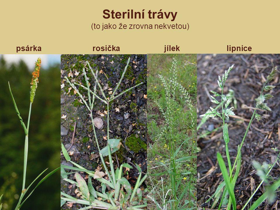 Sterilní trávy (to jako že zrovna nekvetou)