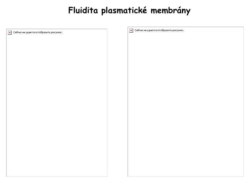 Fluidita plasmatické membrány