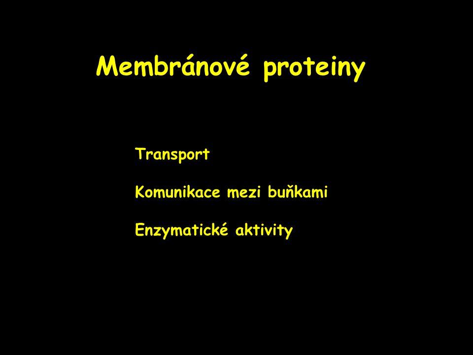 Membránové proteiny Transport Komunikace mezi buňkami