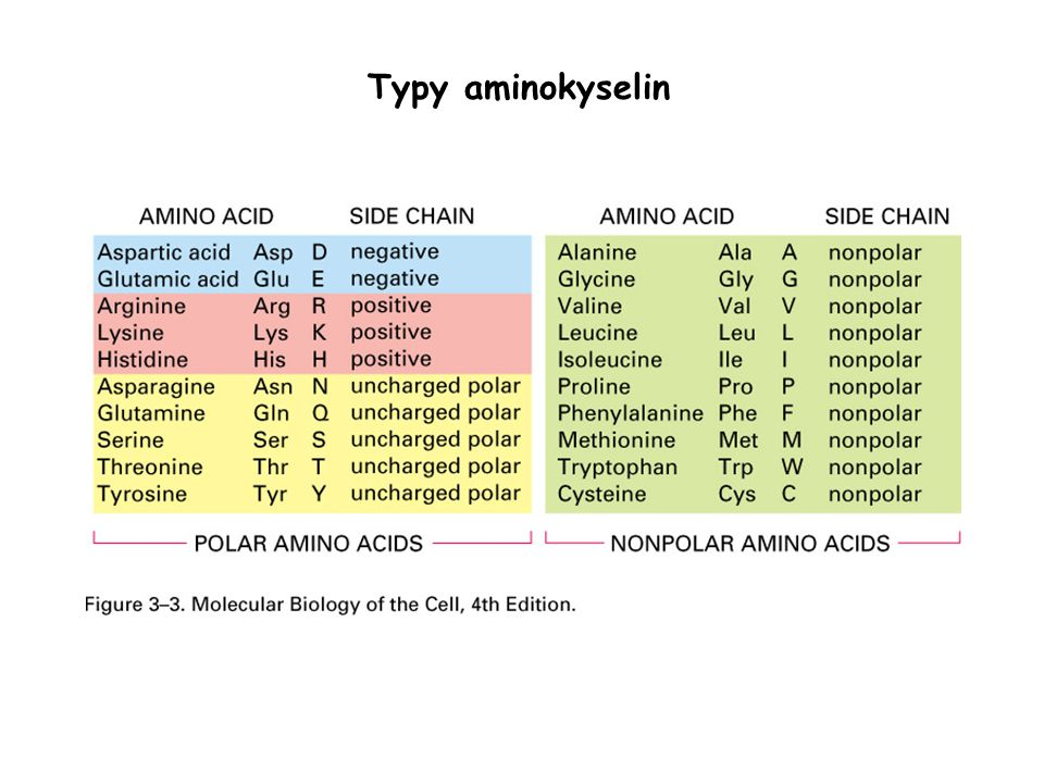 Typy aminokyselin