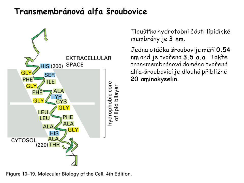 Transmembránová alfa šroubovice