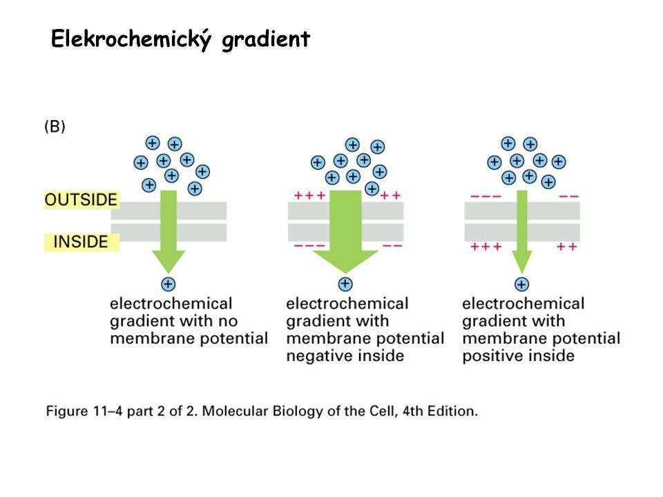 Elekrochemický gradient