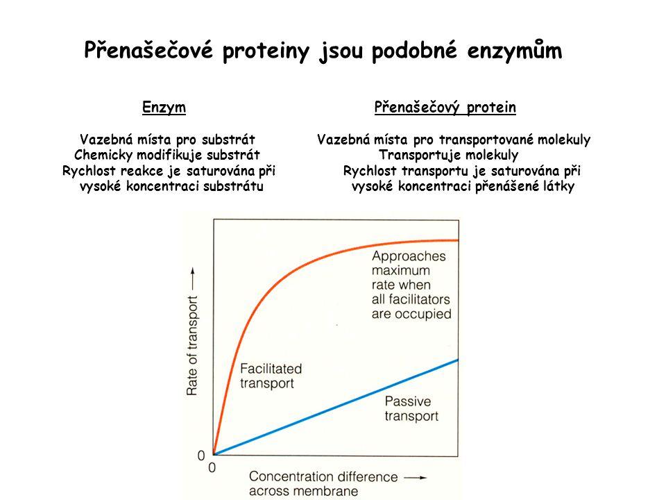 Přenašečové proteiny jsou podobné enzymům