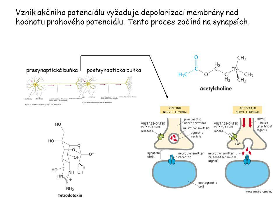 Vznik akčního potenciálu vyžaduje depolarizaci membrány nad hodnotu prahového potenciálu. Tento proces začíná na synapsích.