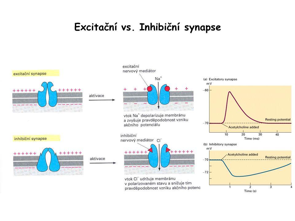 Excitační vs. Inhibiční synapse