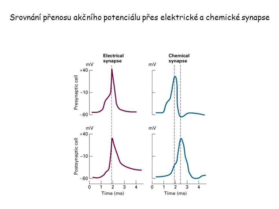 Srovnání přenosu akčního potenciálu přes elektrické a chemické synapse
