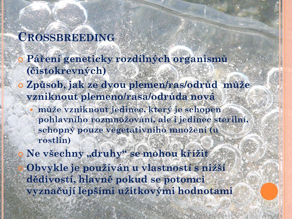 Crossbreeding Páření geneticky rozdílných organismů (čistokrevných)