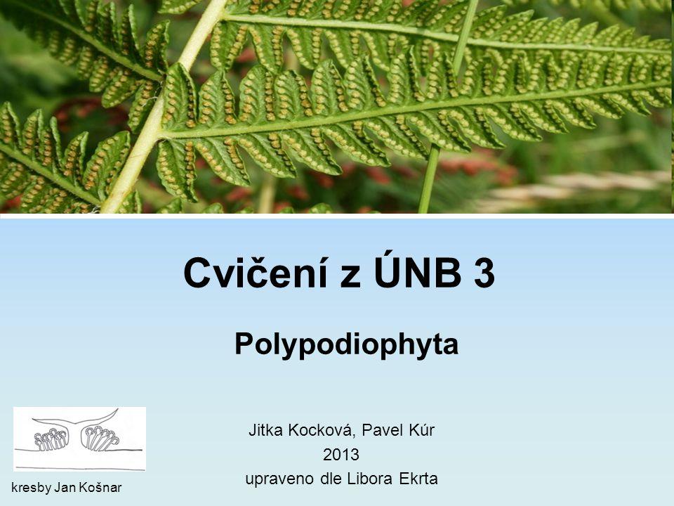 Cvičení z ÚNB 3 Polypodiophyta Jitka Kocková, Pavel Kúr 2013