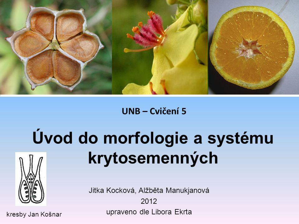 Úvod do morfologie a systému krytosemenných
