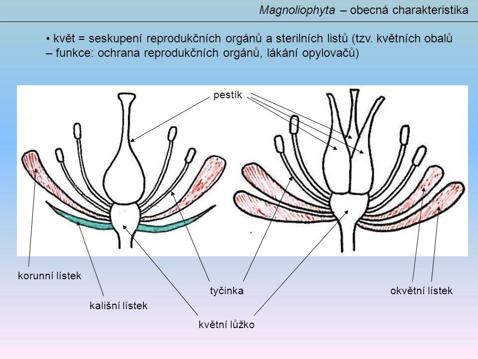 Magnoliophyta – obecná charakteristika