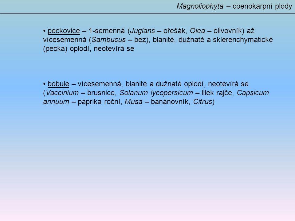 Magnoliophyta – coenokarpní plody