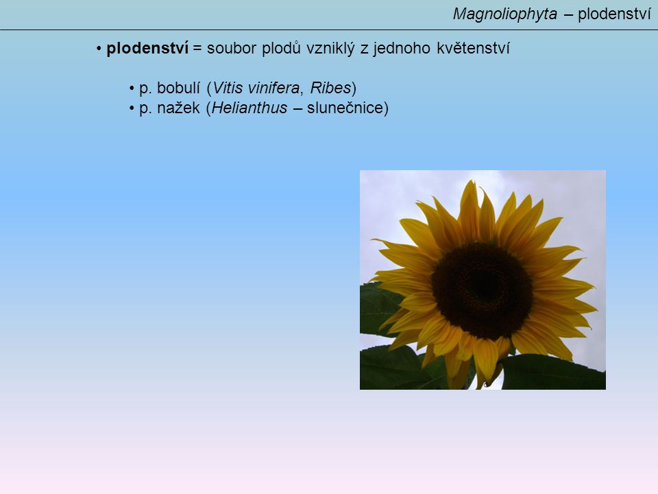 Magnoliophyta – plodenství