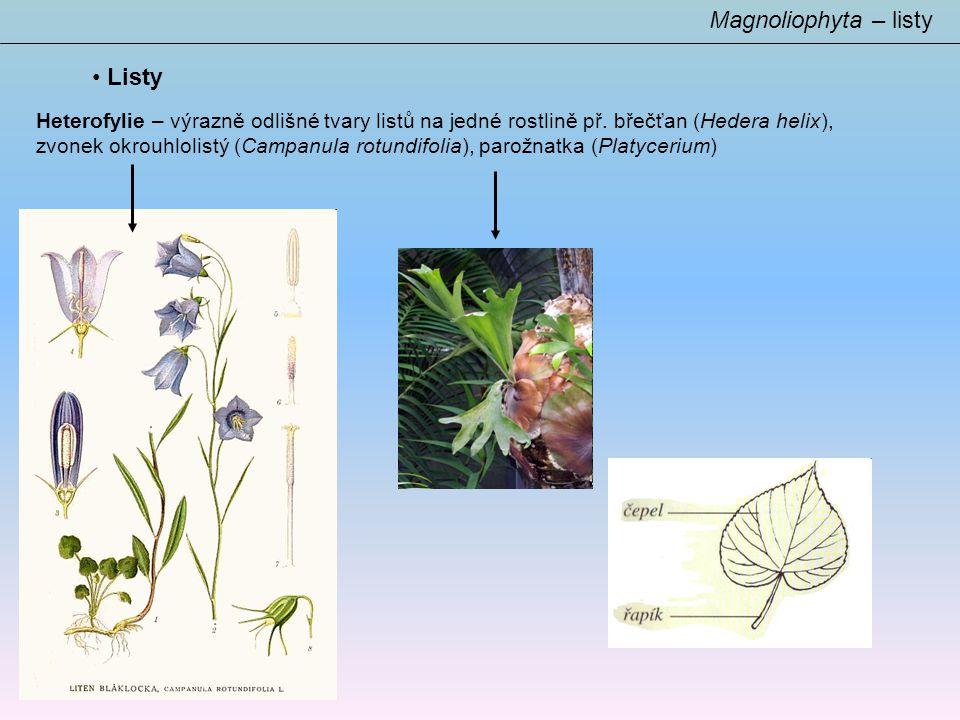 Magnoliophyta – listy Listy
