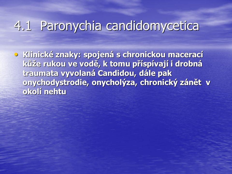 4.1 Paronychia candidomycetica