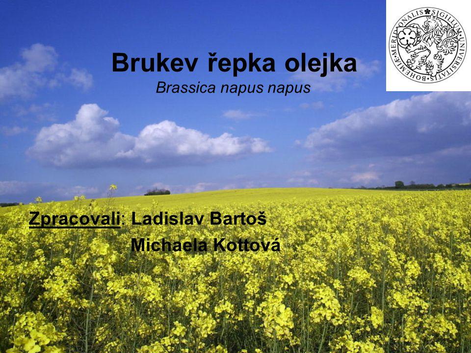 Brukev řepka olejka Brassica napus napus Zpracovali: Ladislav Bartoš