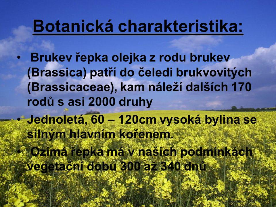 Botanická charakteristika: