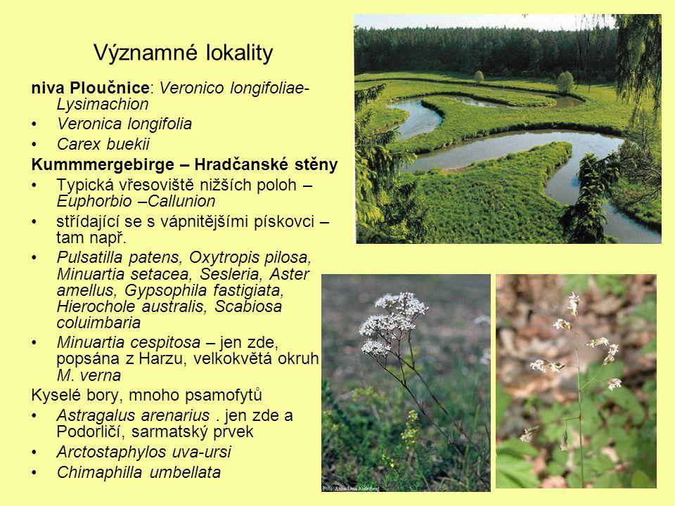 Významné lokality niva Ploučnice: Veronico longifoliae-Lysimachion